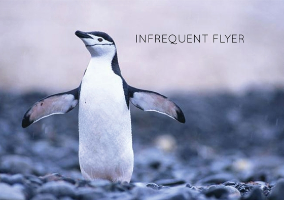 Infrequent flyer
